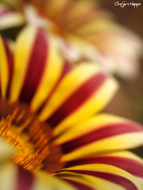 090526goldenflower.jpg