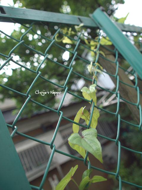 090608Amenochihare04.jpg