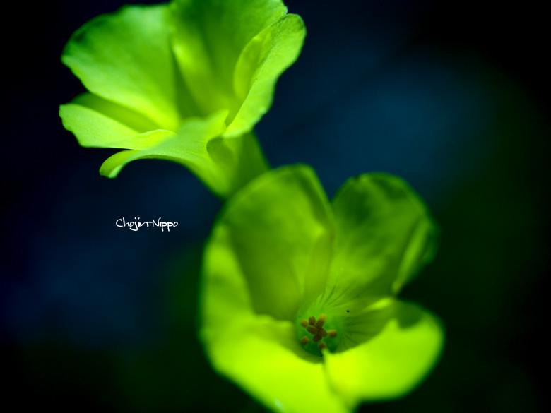 100327yellowflower.jpg