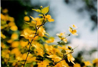 070414FE-02flower.jpg