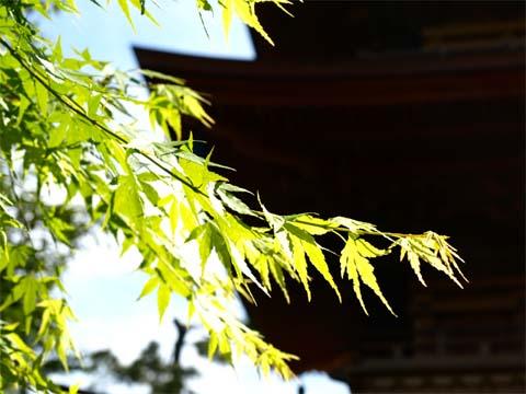 070501Gotokuji_22.jpg
