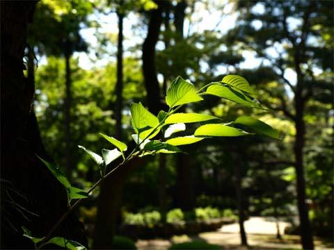 070501Gotokuji_37.jpg
