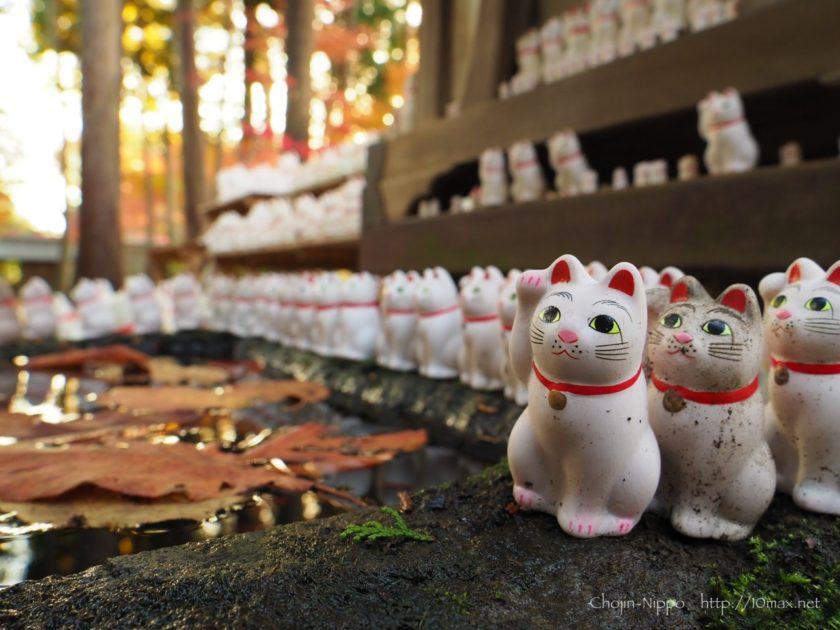豪徳寺, 招き猫