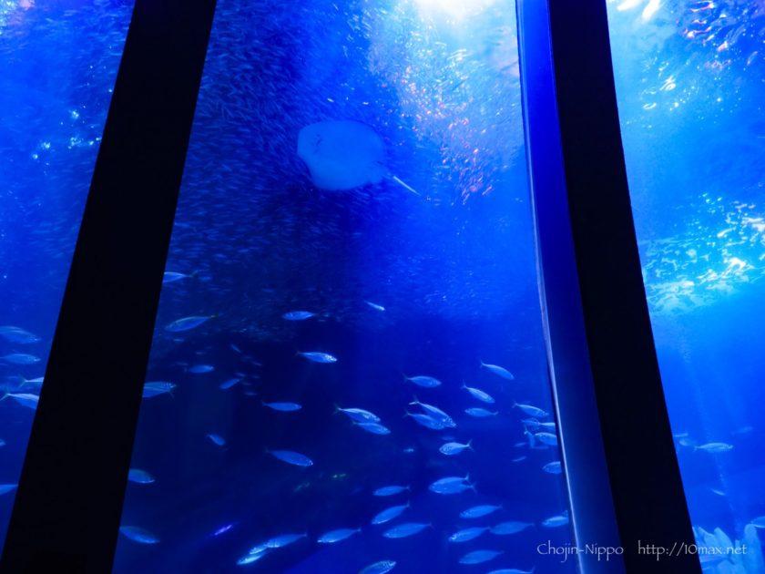 八景島シーパラダイス 水族館