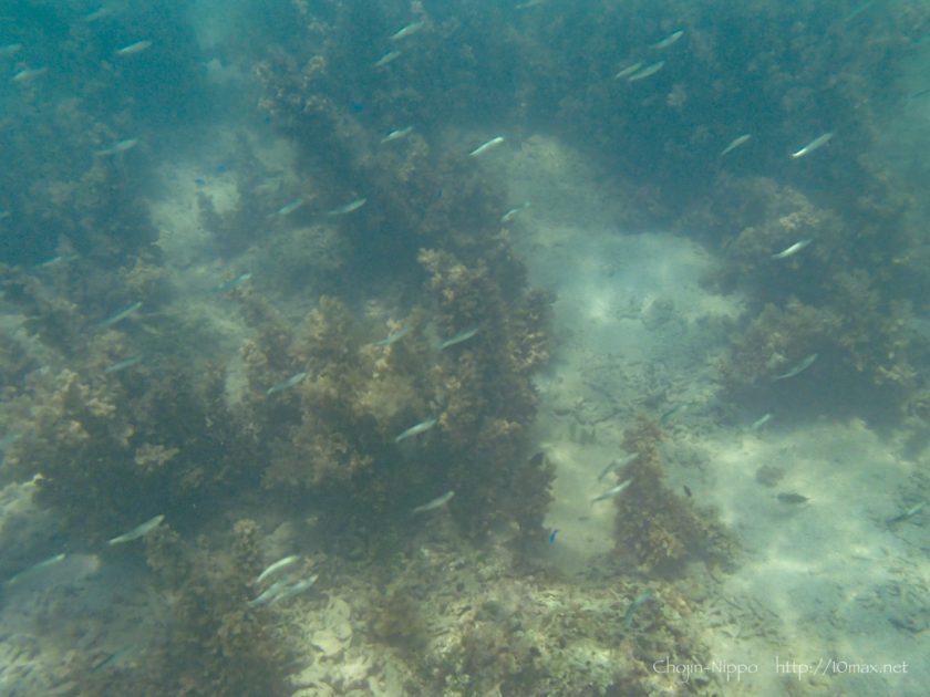 フサキビーチ 熱帯魚 石垣島 シュノーケリング