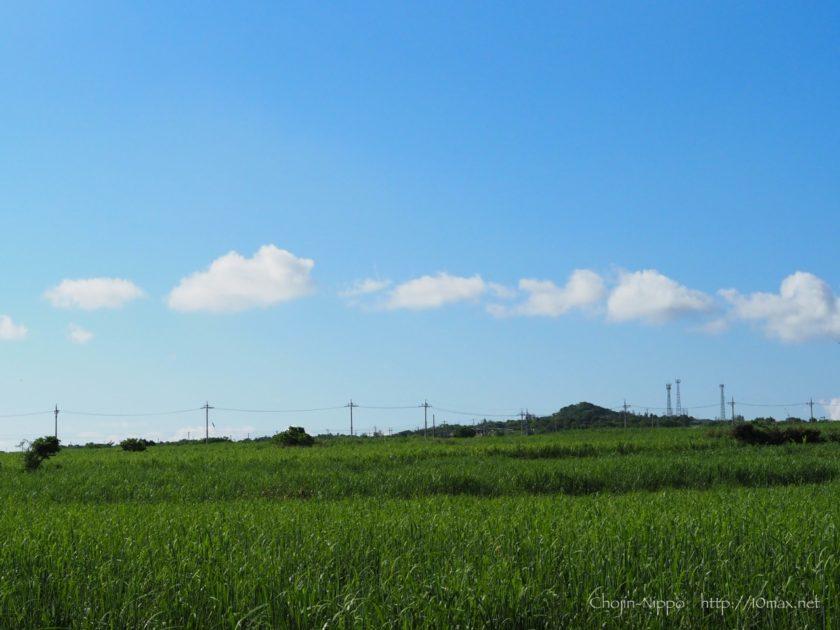 石垣島 サトウキビ畑