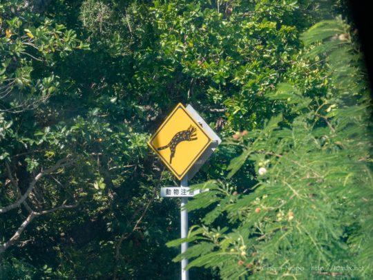 西表島 動物注意 標識 イリオモテヤマネコ