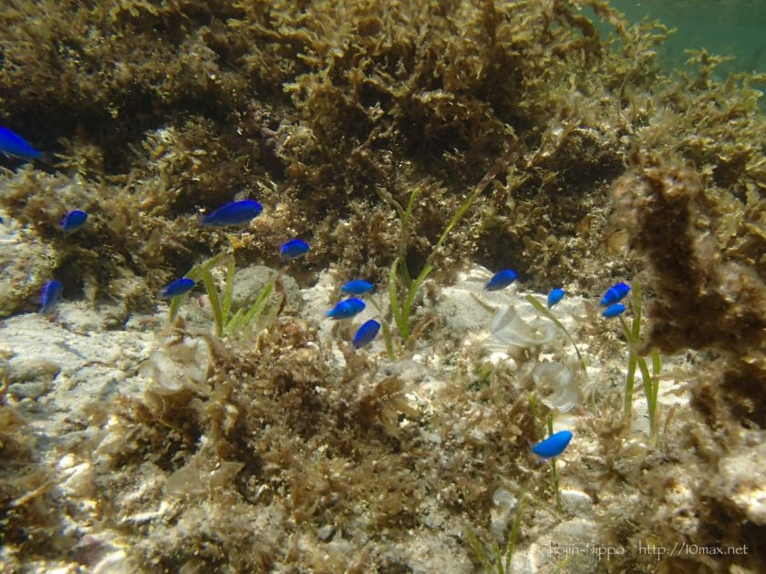 沖縄 石垣島 米原ビーチ シュノーケリング 熱帯魚