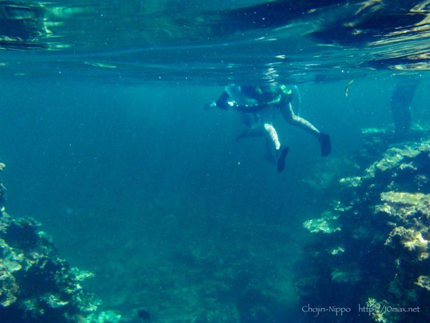 沖縄 石垣島 米原ビーチ シュノーケリング 珊瑚