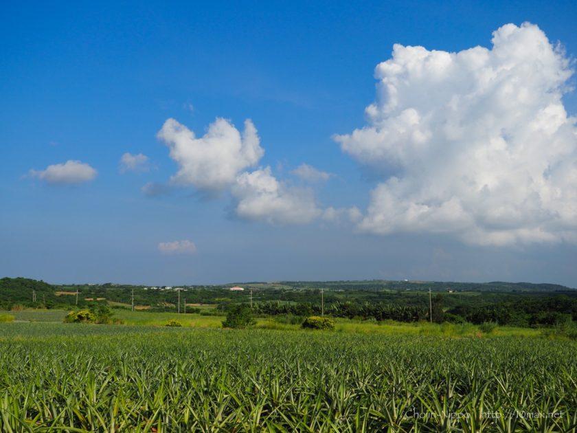 石垣島 パイナップル畑