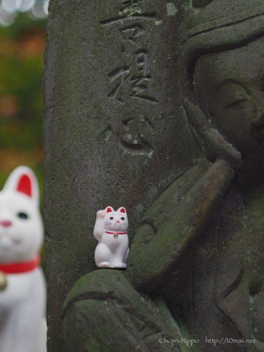 豪徳寺 招き猫 紅葉