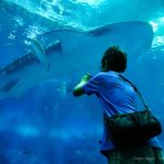 美ら海水族館 ジンベエザメ
