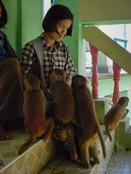 バガン ポッパ山 タウン・カラッ ミャンマー 猿