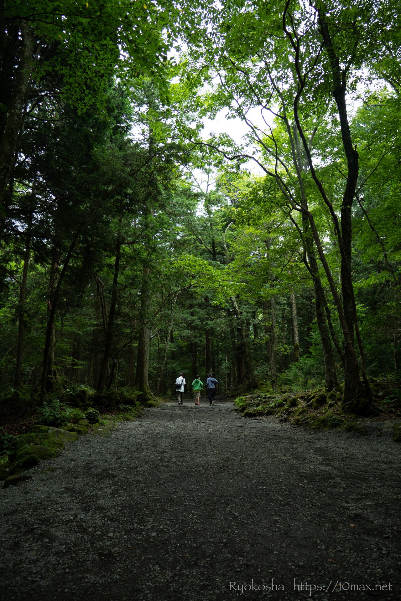 青木ヶ原樹海 富士の樹海 富岳風穴 散策